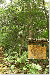トトロの森のイメージ