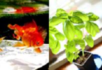 野菜と魚を育てるアクアポニックスの写真