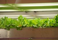 植物工場の魅力 ~LED照明で植物を作ることの大切さ~の写真