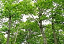 森林伐採についての写真