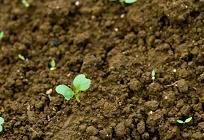 土壌汚染とバイオレメディエーションの写真