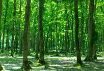日本の森林資源の写真