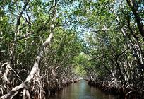 マングローブの生態の理由の写真