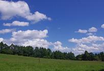 緑地の気温緩衝器能で都心のヒートアイランド現象の緩和の写真