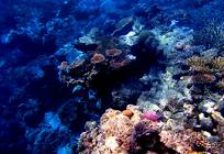 海洋汚染問題と海がもたらす影響の写真