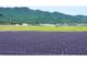 Amazonが国内最大規模の再生可能エネルギー電力調達契約を締結。コーポレートPPAが国内でも活発に。の写真